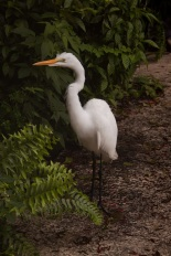 Egret before its egress
