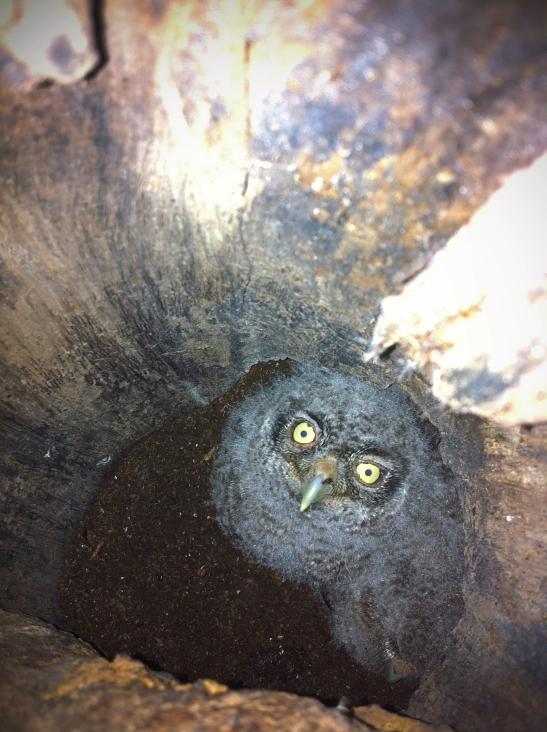 Owl's Lair