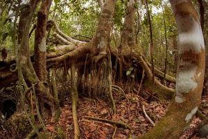 Angkor Wat, Dagobah, or Florida?